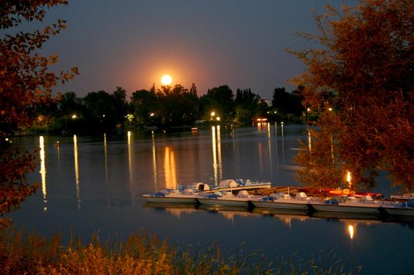Lato nad Starym Dunajem (fot. Vienna Tourist Board)