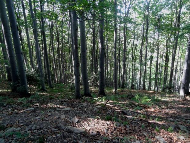Beskid Wyspowy (fot. Odkryj Beskid Wyspowy)