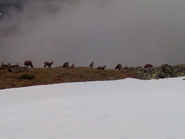 Stado kozic w okolicach Liliowego (fot. Marcin Świerc)