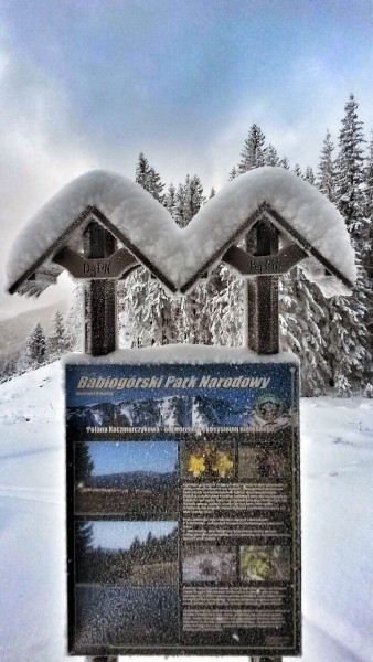 bieg-snieznej-pantery-2015-zawoja1