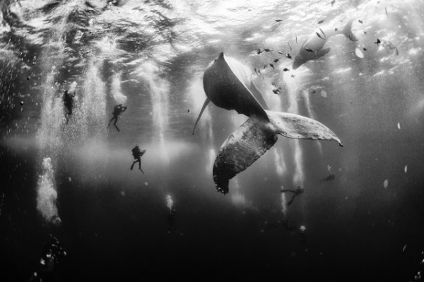 Anuar Patjane Floriuk / National Geographic Traveler Photo Contest, Whale Whisperers