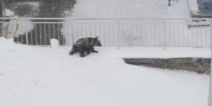 Niedźwiadek na Kasprowym Wierchu