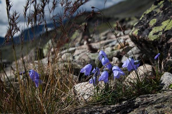 Norweska flora i fauna (fot. Konrad Konieczny)