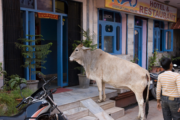 Uszanuj lokalne zwyczaje - wcześniej dowiedz się co  w danym kraju może być interpretowane jako zachowanie niegrzeczne (na zdjęciu kadr z podróży po Indiach, fot. Michał Unolt)