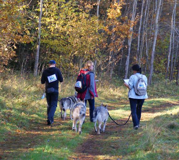 Udział w Dogtrekkingu zapewnia świetną zabawę na świeżym powietrzu, dostarcza wielu emocji, korzystnie wpływa na kondycję fizyczną, umożliwia kontakt z przyrodą, a przede wszystkim wzmacnia więź pomiędzy przewodnikiem i jego psem (fot. lupusek.com)