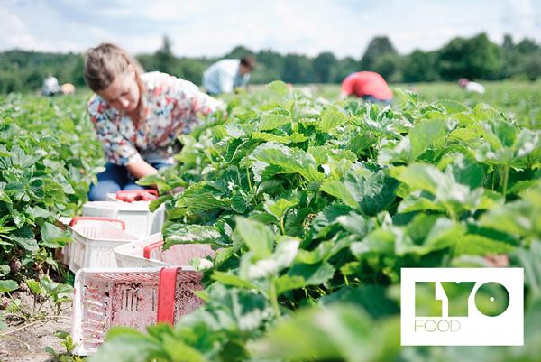 LYO-FOOD-Plantacje-2