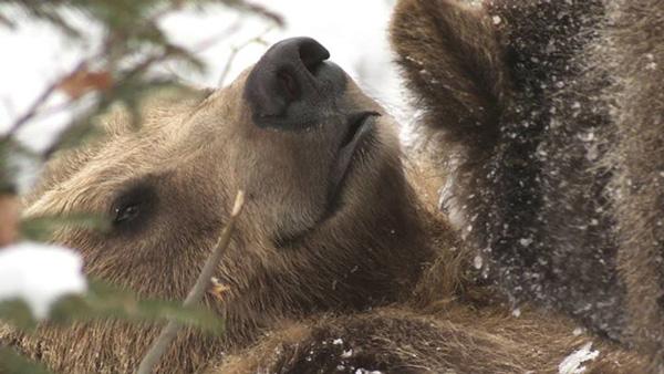 """Kadr z filmu """"Niedźwiedź. Władca gór"""""""