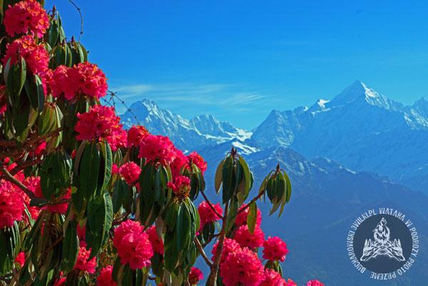 Rododendrony w Himalajach (fot. 3wilki.pl)