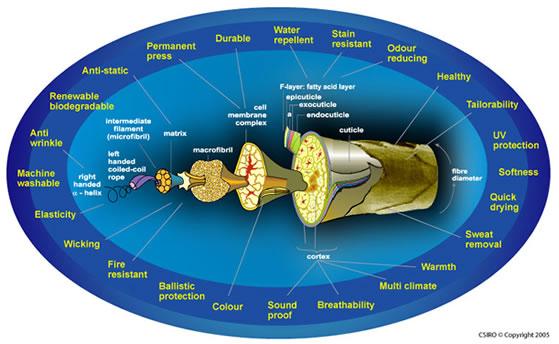 Struktura włókna i zalety wełny merino opracowane przez  Commonwealth Scientific and Industrial Research Organisation
