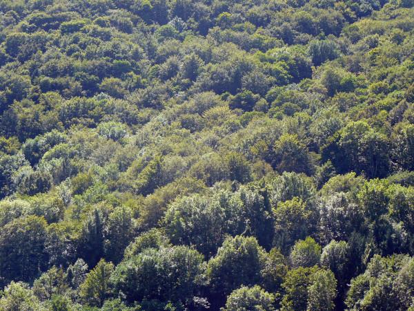 Bujne lasy Słowenii (fot. Outdoor Magazyn)