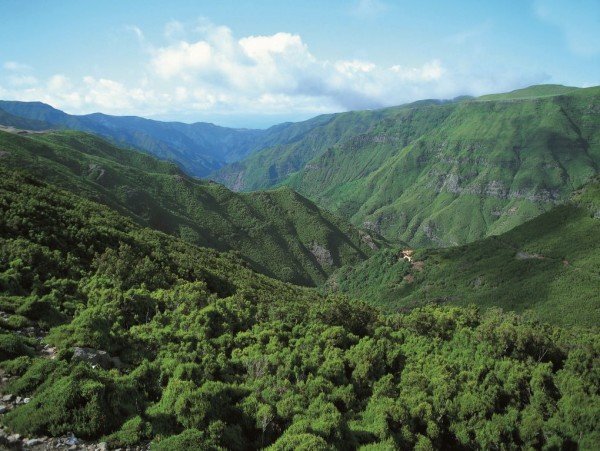 Madera - Laurissilva (fot. Rabaçal - Madeira Tourism Office)