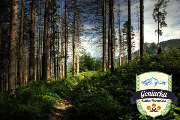 tatry-1035792_1280 - Kopia