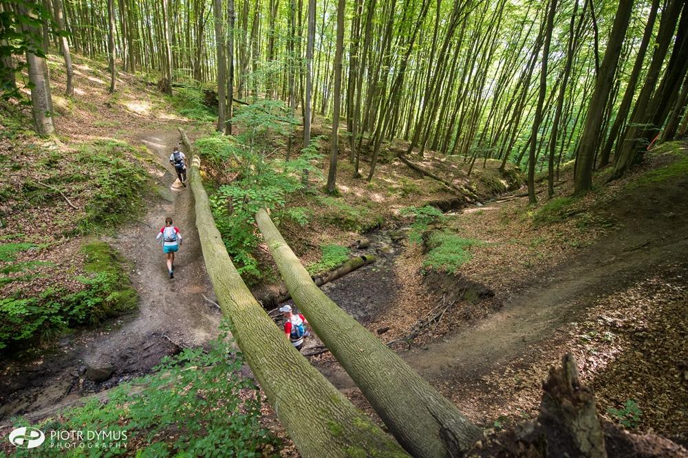 TriCity Trail, rozgrywanego na ścieżkach Trójmiejskiego Parku Krajobrazowego (fot. Piotr Dymus)