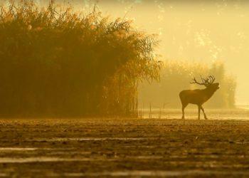 """fot. kadr z filmu """"Poznaj Dolinę Baryczy"""""""