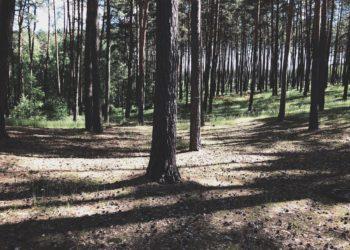 Tak powinien wyglądać las - czysto, bez śmieci (fot. MG / outdoormagazyn.pl)