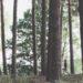 """Poszukiwanie legalnego miejsca na """"dziki"""" biwak bywa trudne - jednak są na to sposoby (fot. MG / outdoormagazyn.pl)"""