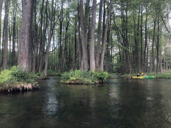 Spływy kajakowe Wdą