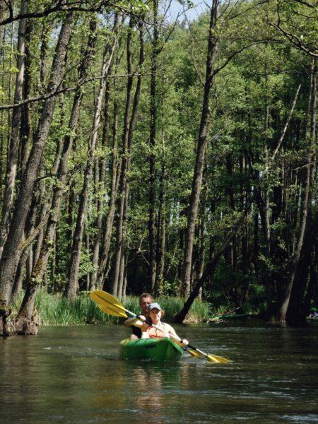 Spływ kajakowy Wdą