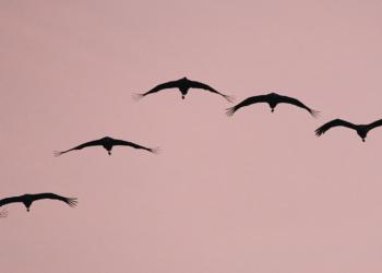 Jesienne wędrówki ptaków (fot. Robert Bogusz)