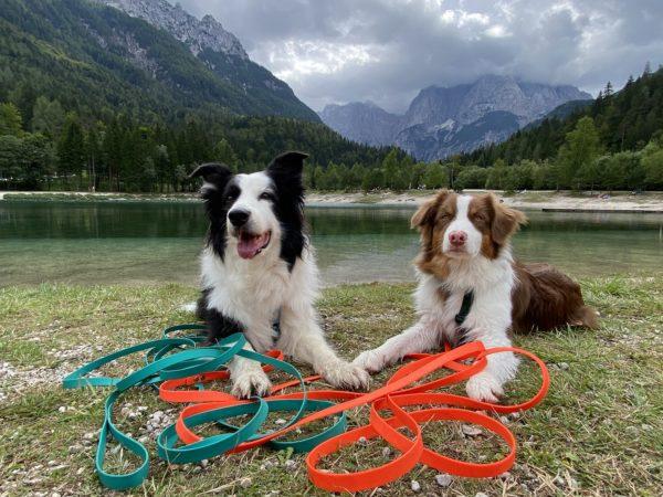 Podróże z psem poradnik